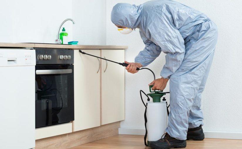 המדריך לניקיון הבית לפני הדברה